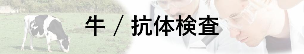 牛/抗体検査